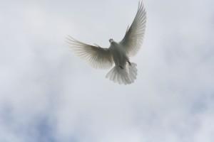pomba branca voando no céu
