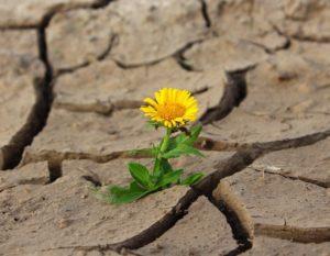 flor que nasce em um ambiente árido